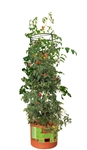 Tomato Tree w/ 3' Tower
